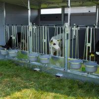 Calf hutch for 3 calves