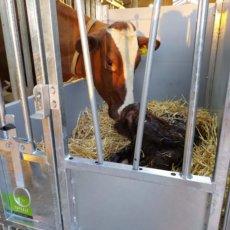 First care calf hutch