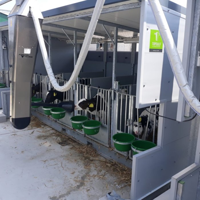 Calf housing equipped with Förster CalfRail