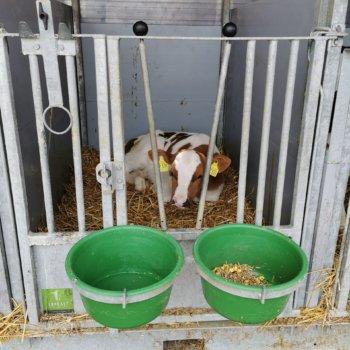 Melkveebedrijf Albers